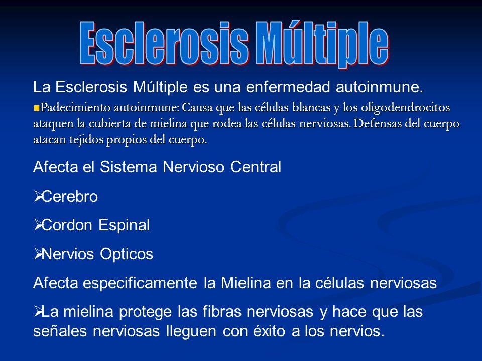 La Esclerosis Múltiple es una enfermedad autoinmune. Padecimiento autoinmune: Causa que las células blancas y los oligodendrocitos ataquen la cubierta