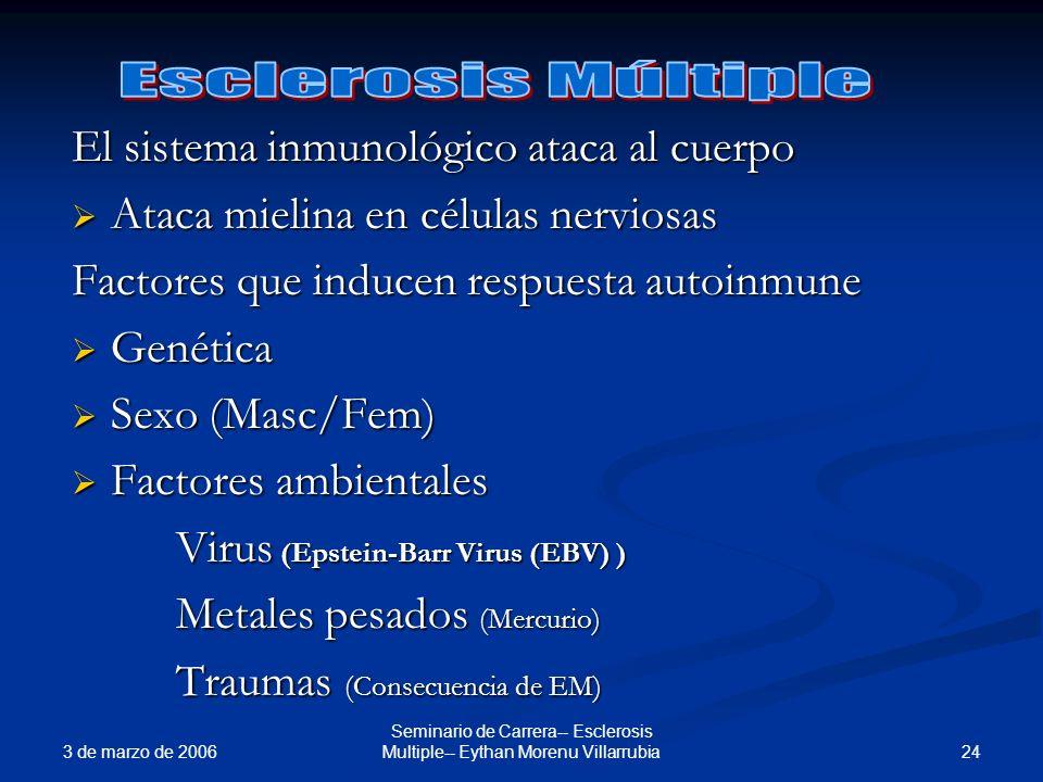3 de marzo de 2006 24 Seminario de Carrera-- Esclerosis Multiple-- Eythan Morenu Villarrubia El sistema inmunológico ataca al cuerpo Ataca mielina en