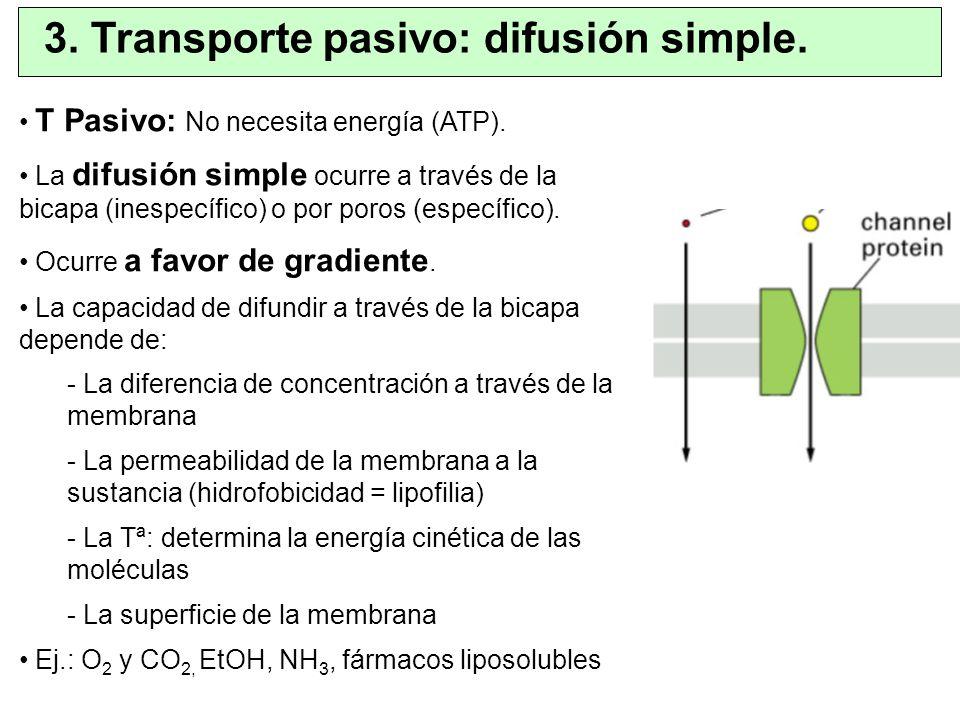 T Pasivo: No necesita energía (ATP). La difusión simple ocurre a través de la bicapa (inespecífico) o por poros (específico). Ocurre a favor de gradie