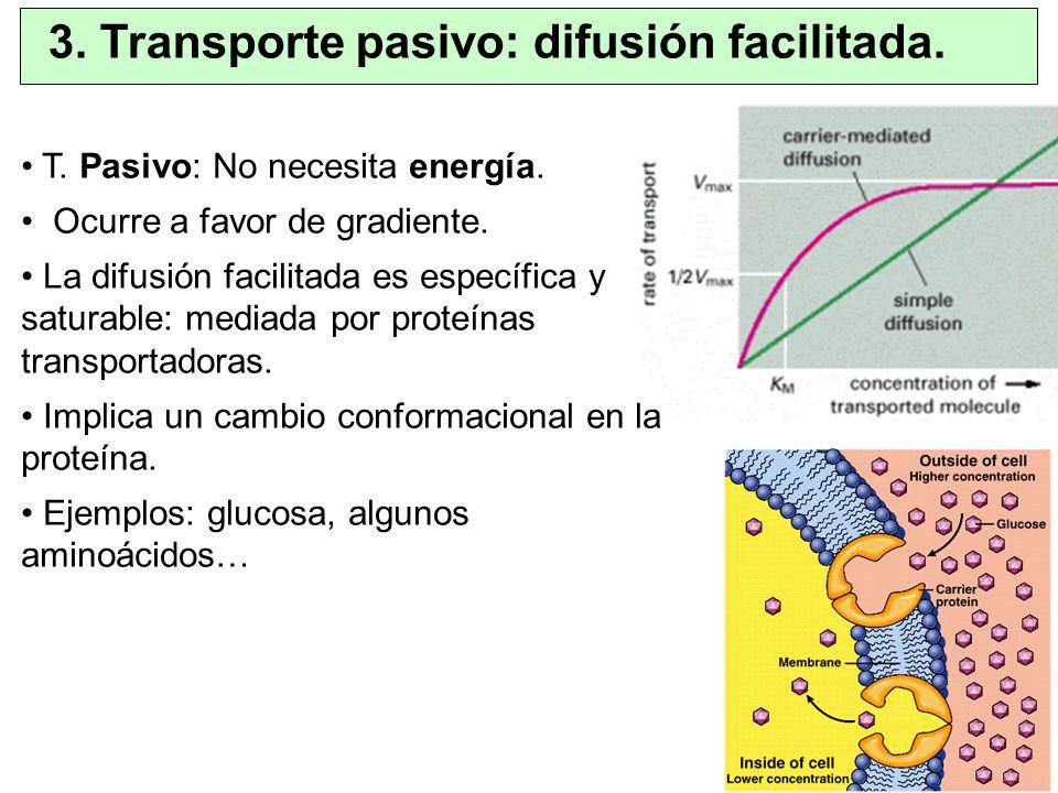 3. Transporte pasivo: difusión facilitada. T. Pasivo: No necesita energía. Ocurre a favor de gradiente. La difusión facilitada es específica y saturab