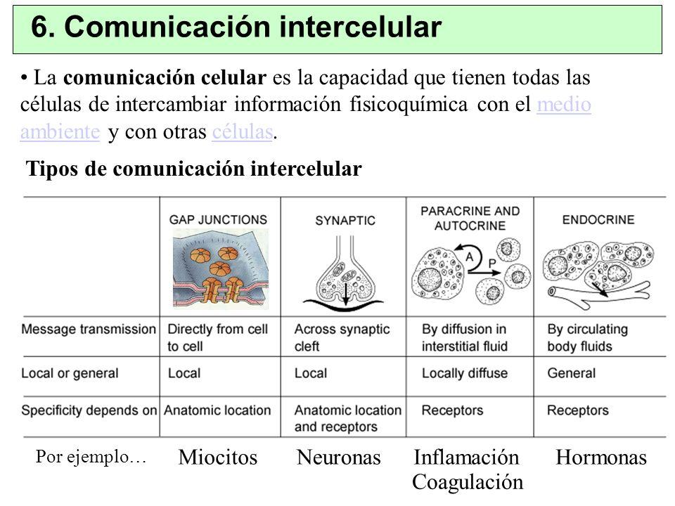 6. Comunicación intercelular Tipos de comunicación intercelular La comunicación celular es la capacidad que tienen todas las células de intercambiar i