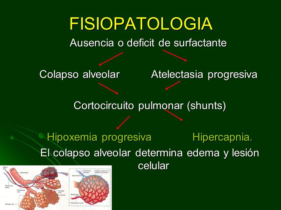 FISIOPATOLOGIA Ausencia o deficit de surfactante Colapso alveolar Atelectasia progresiva Cortocircuito pulmonar (shunts) Cortocircuito pulmonar (shunts) Hipoxemia progresiva Hipercapnia.