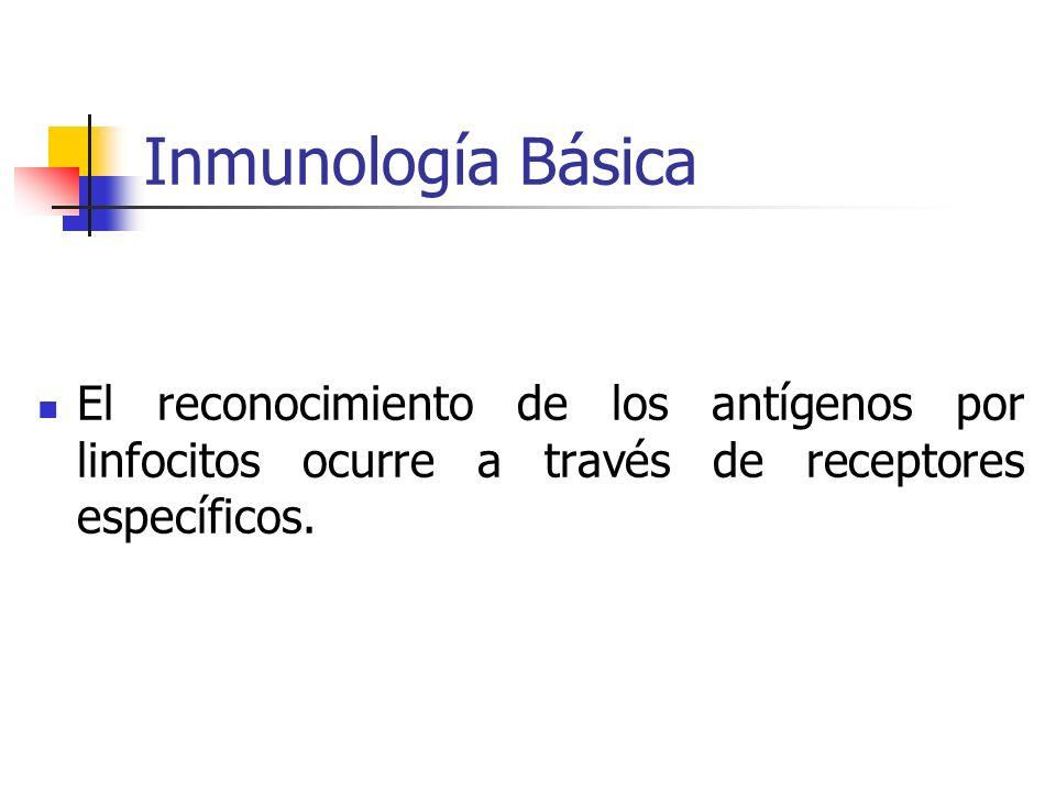 Inmunología Básica El reconocimiento de los antígenos por linfocitos ocurre a través de receptores específicos.