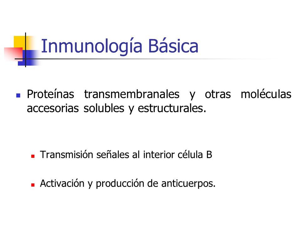 Inmunología Básica Proteínas transmembranales y otras moléculas accesorias solubles y estructurales. Transmisión señales al interior célula B Activaci