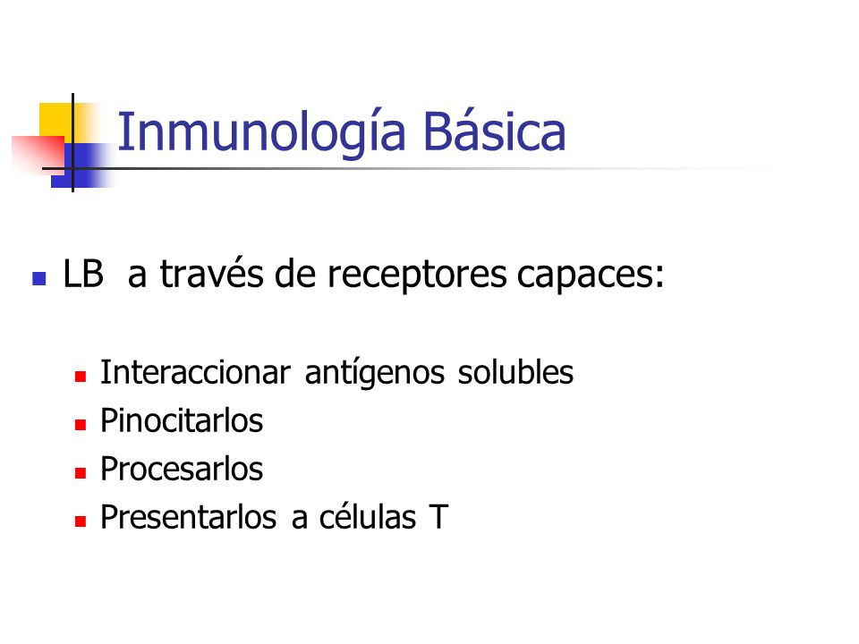 Inmunología Básica LB a través de receptores capaces: Interaccionar antígenos solubles Pinocitarlos Procesarlos Presentarlos a células T