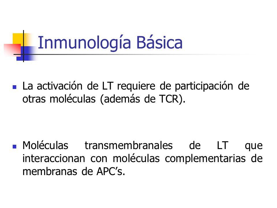 Inmunología Básica La activación de LT requiere de participación de otras moléculas (además de TCR). Moléculas transmembranales de LT que interacciona