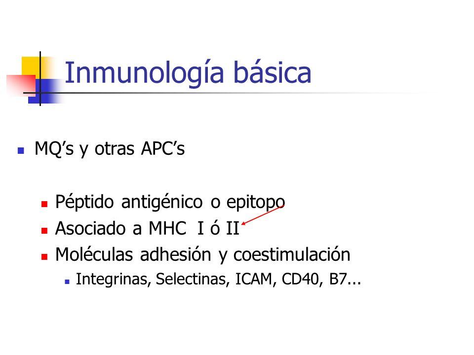Inmunología básica MQs y otras APCs Péptido antigénico o epitopo Asociado a MHC I ó II Moléculas adhesión y coestimulación Integrinas, Selectinas, ICA