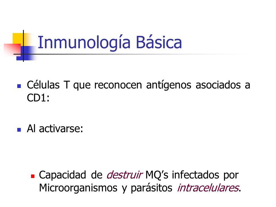 Inmunología Básica Células T que reconocen antígenos asociados a CD1: Al activarse: Capacidad de destruir MQs infectados por Microorganismos y parásit