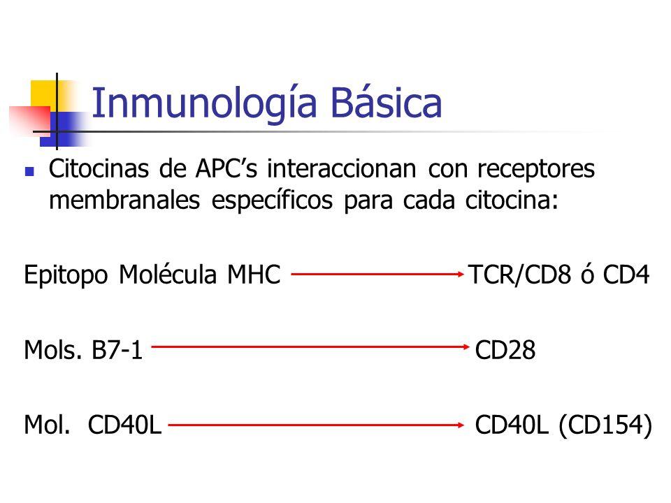 Inmunología Básica Citocinas de APCs interaccionan con receptores membranales específicos para cada citocina: Epitopo Molécula MHC TCR/CD8 ó CD4 Mols.