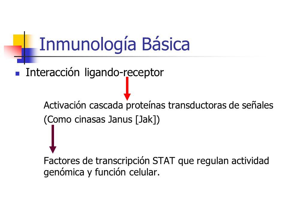 Inmunología Básica Interacción ligando-receptor Activación cascada proteínas transductoras de señales (Como cinasas Janus [Jak]) Factores de transcrip