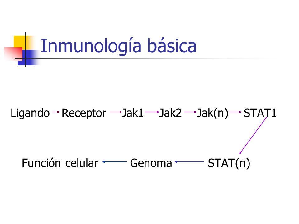 Inmunología básica Ligando Receptor Jak1 Jak2 Jak(n) STAT1 Función celularGenoma STAT(n)