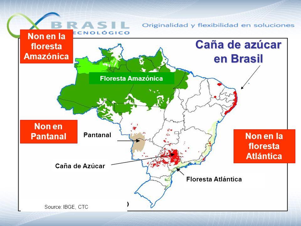 Caña de azúcar en Brasil Floresta Atlántica Non en la floresta Amazónica Non en la floresta Atlántica Non en Pantanal Pantanal Caña de Azúcar Floresta