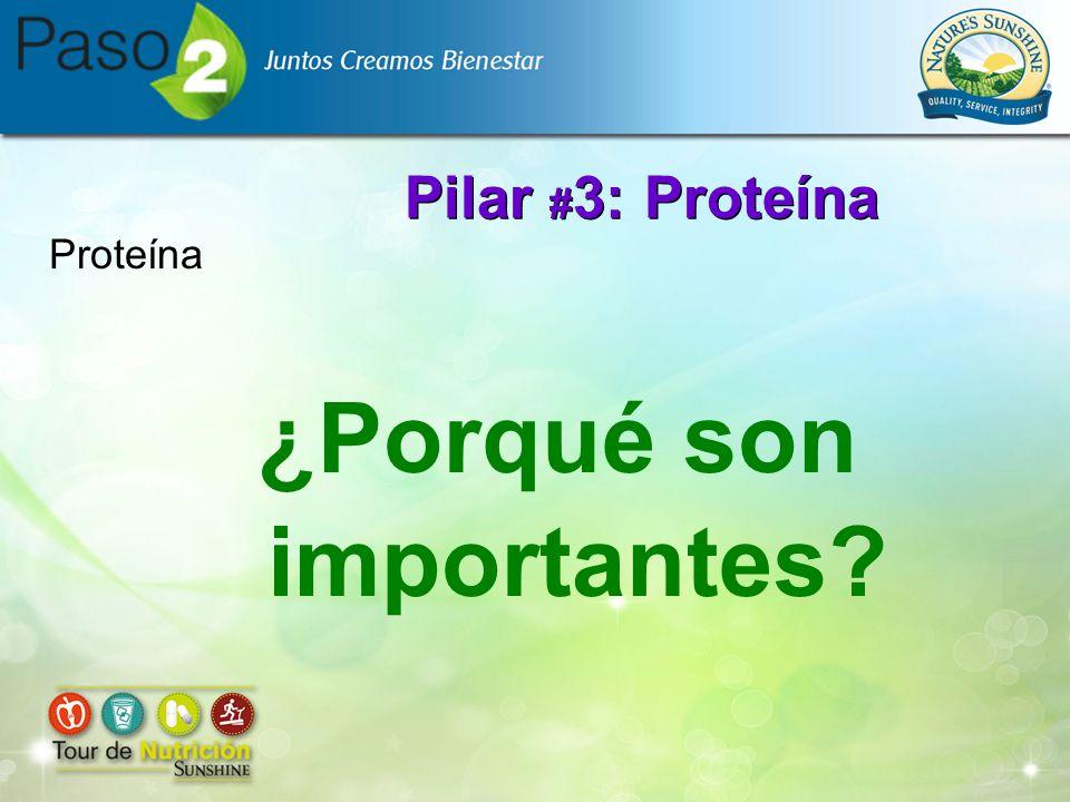 Pilar # 3: Proteína ¿Porqué son importantes? Proteína