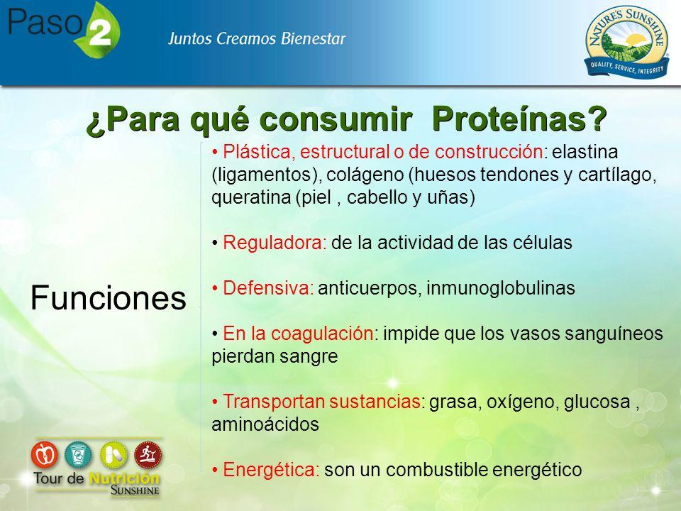 ¿Para qué consumir Proteínas? Funciones Plástica, estructural o de construcción: elastina (ligamentos), colágeno (huesos tendones y cartílago, querati