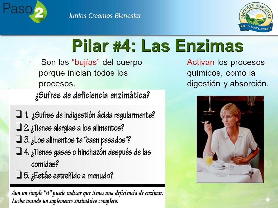 Pilar # 4: Las Enzimas Son las bujías del cuerpo porque inician todos los procesos. Activan los procesos químicos, como la digestión y absorción.