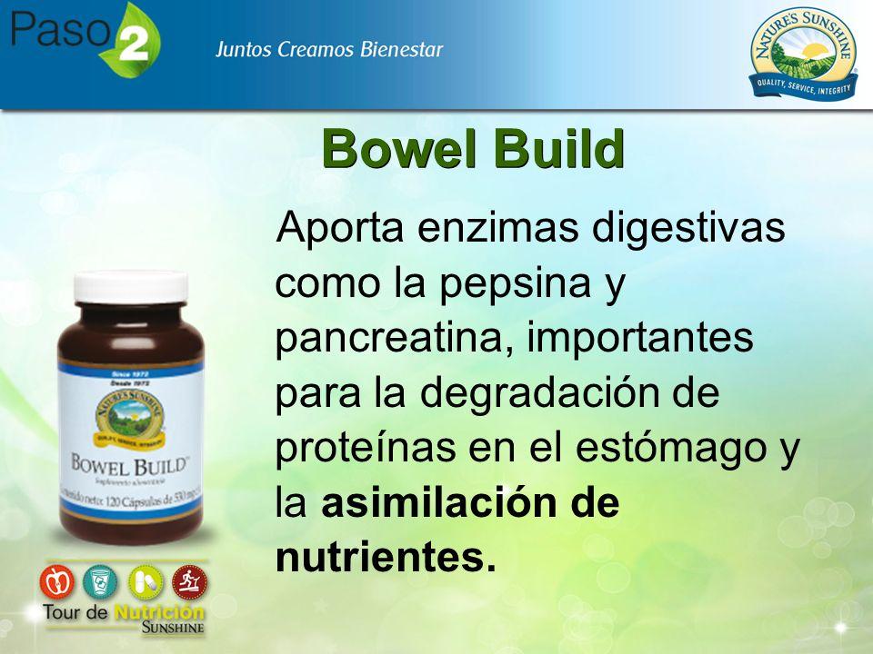 Bowel Build Aporta enzimas digestivas como la pepsina y pancreatina, importantes para la degradación de proteínas en el estómago y la asimilación de n