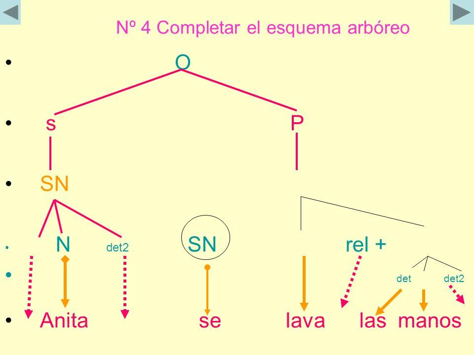 Nº 4 Completar el esquema arbóreo O s P SN N det2 SN rel + det det2 Anita se lava las manos