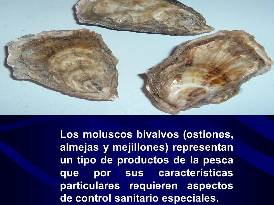 Los moluscos bivalvos (ostiones, almejas y mejillones) representan un tipo de productos de la pesca que por sus características particulares requieren