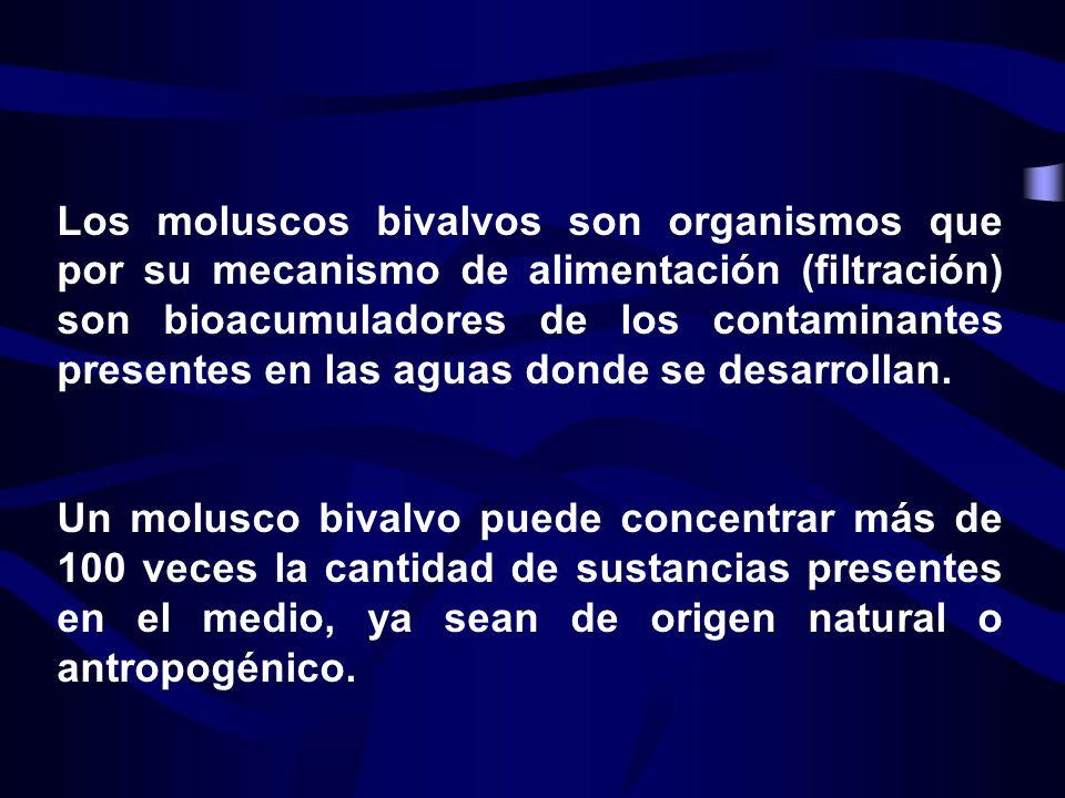 Los moluscos bivalvos son organismos que por su mecanismo de alimentación (filtración) son bioacumuladores de los contaminantes presentes en las aguas