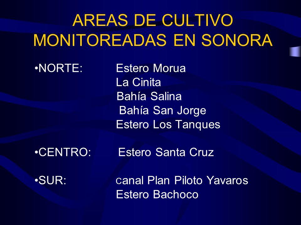 AREAS DE CULTIVO MONITOREADAS EN SONORA NORTE: Estero Morua La Cinita Bahía Salina Bahía San Jorge Estero Los Tanques CENTRO: Estero Santa Cruz SUR: C