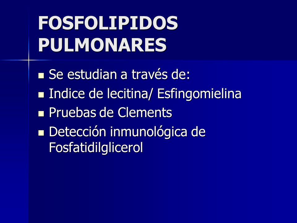 FOSFOLIPIDOS PULMONARES Se estudian a través de: Se estudian a través de: Indice de lecitina/ Esfingomielina Indice de lecitina/ Esfingomielina Prueba