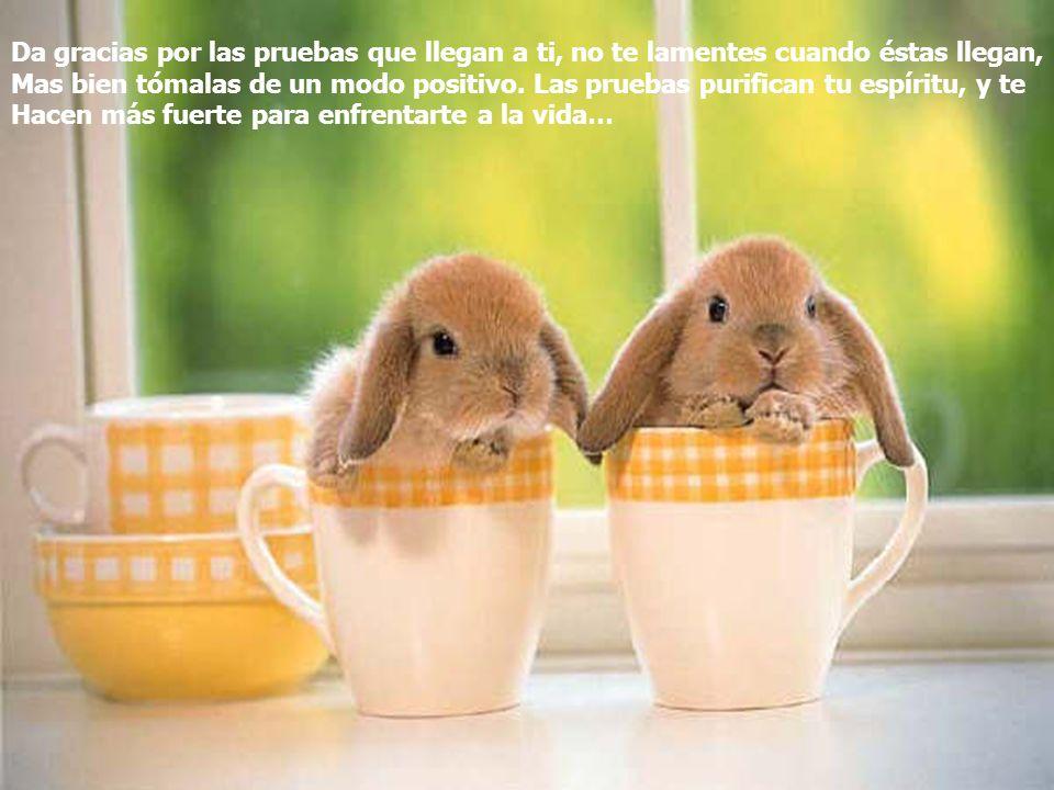 www.iasdsanjudas.com Da gracias por las pruebas que llegan a ti, no te lamentes cuando éstas llegan, Mas bien tómalas de un modo positivo. Las pruebas