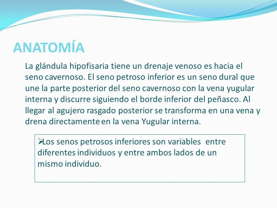 ANATOMÍA Esquema del drenaje venoso: 1- seno intercavernoso 2- Seno Petroso Inferior (SPI) 3- Vena condílea anterior 4- Vena Yugular 1 3 2
