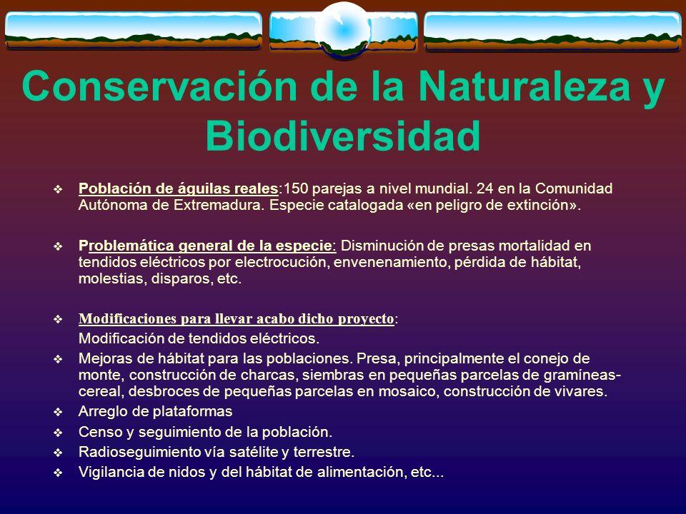 Conservación de la Naturaleza y Biodiversidad Población de águilas reales:150 parejas a nivel mundial. 24 en la Comunidad Autónoma de Extremadura. Esp