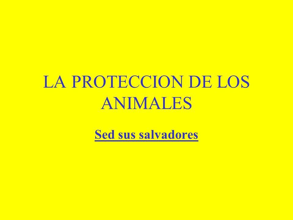 LA PROTECCION DE LOS ANIMALES Sed sus salvadores