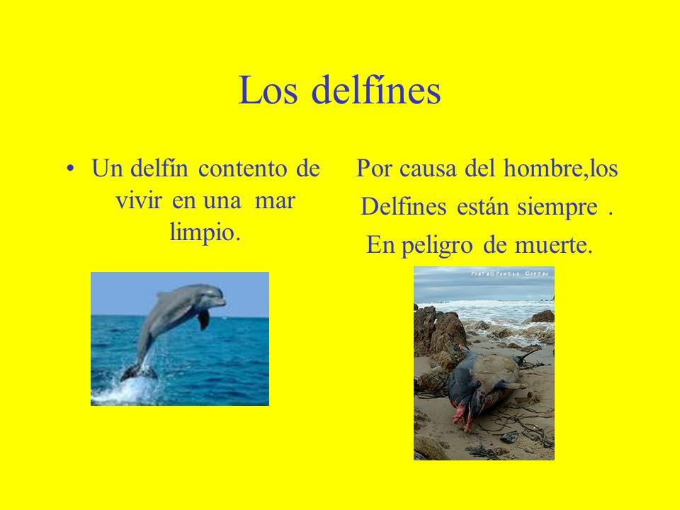 Los delfínes Un delfín contento de vivir en una mar limpio. Por causa del hombre,los Delfines están siempre. En peligro de muerte.