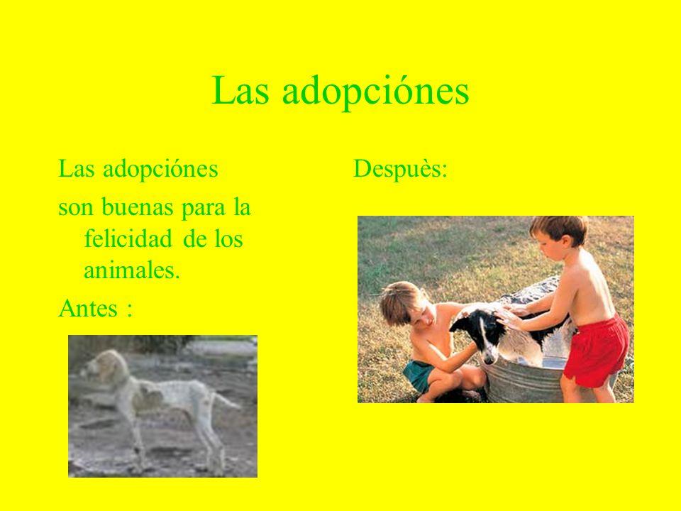 Las adopciónes son buenas para la felicidad de los animales. Antes : Despuès: