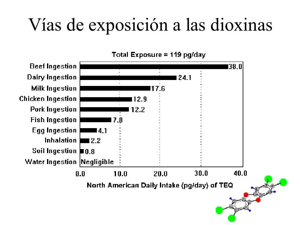 Vías de exposición a las dioxinas