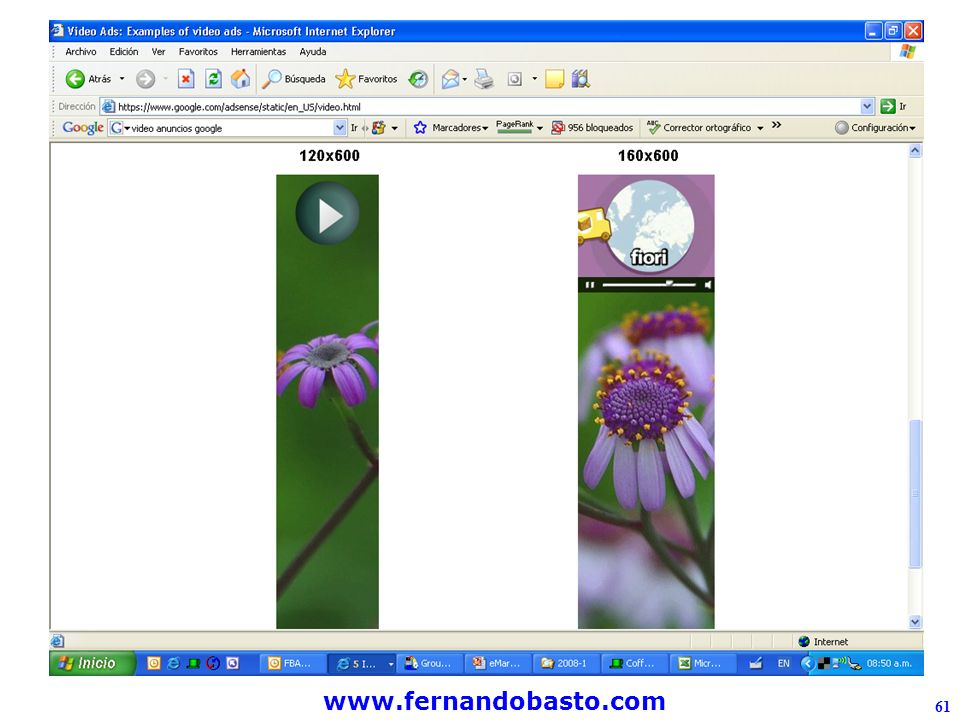 www.fernandobasto.com 61