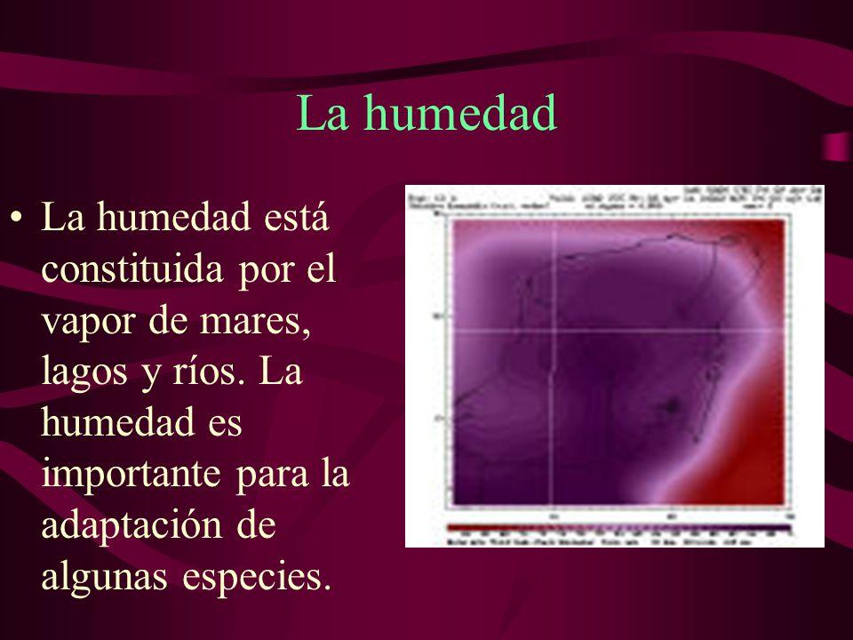 La humedad La humedad está constituida por el vapor de mares, lagos y ríos.