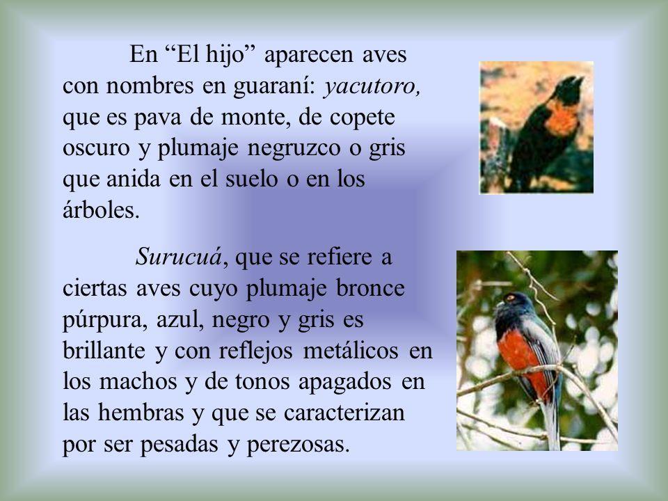 En El hijo aparecen aves con nombres en guaraní: yacutoro, que es pava de monte, de copete oscuro y plumaje negruzco o gris que anida en el suelo o en