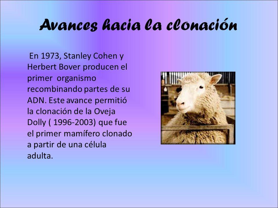 Avances hacia la clonación En 1973, Stanley Cohen y Herbert Bover producen el primer organismo recombinando partes de su ADN. Este avance permitió la
