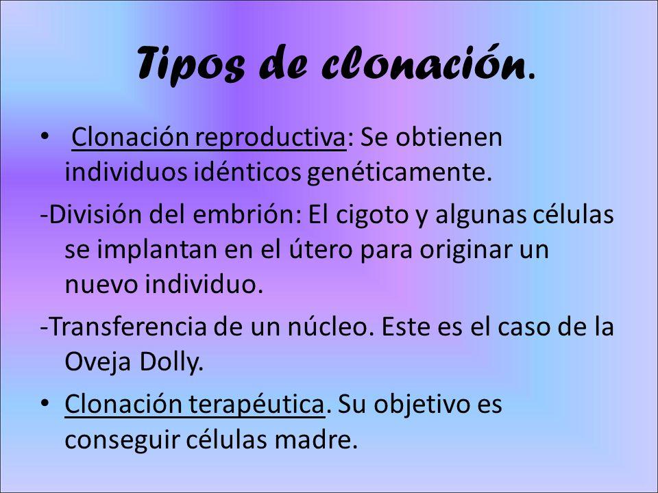 Tipos de clonación. Clonación reproductiva: Se obtienen individuos idénticos genéticamente.