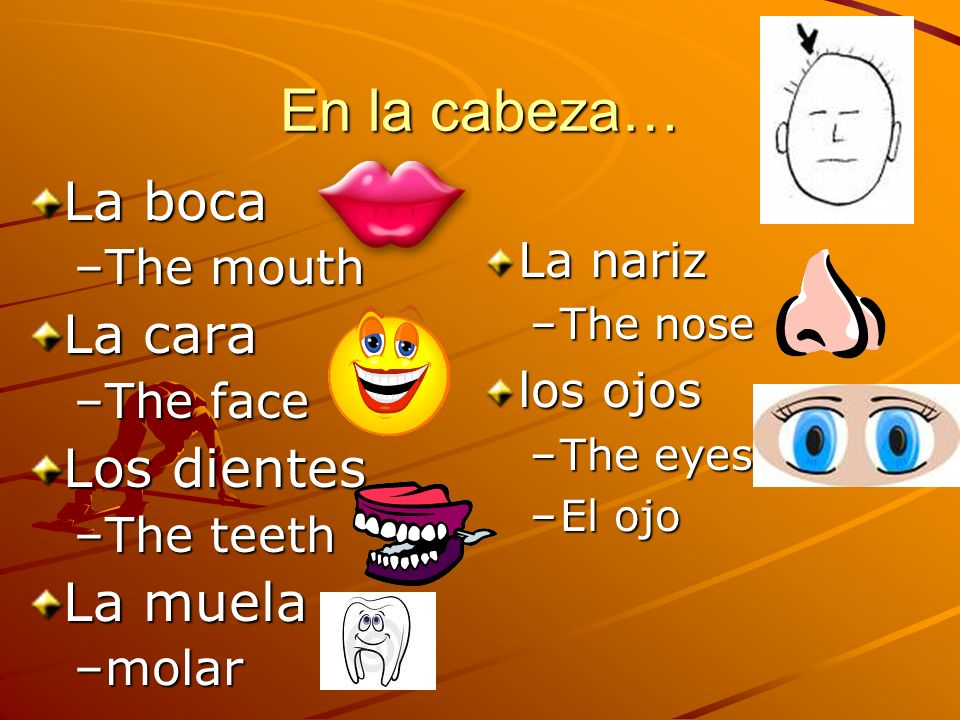 La nariz –The nose los ojos –The eyes –El ojo En la cabeza… La boca –The mouth La cara –The face Los dientes –The teeth La muela –molar