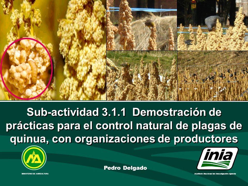 Sub-actividad 3.1.1 Demostración de prácticas para el control natural de plagas de quinua, con organizaciones de productores MINISTERIO DE AGRICULTURA