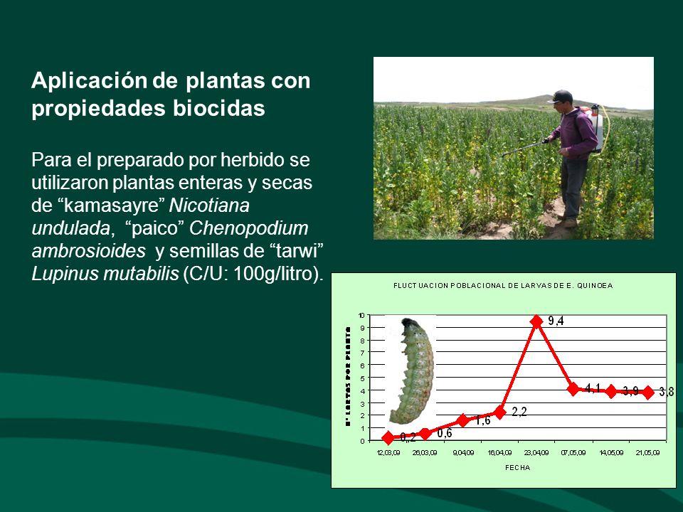 Aplicación de plantas con propiedades biocidas Para el preparado por herbido se utilizaron plantas enteras y secas de kamasayre Nicotiana undulada, pa
