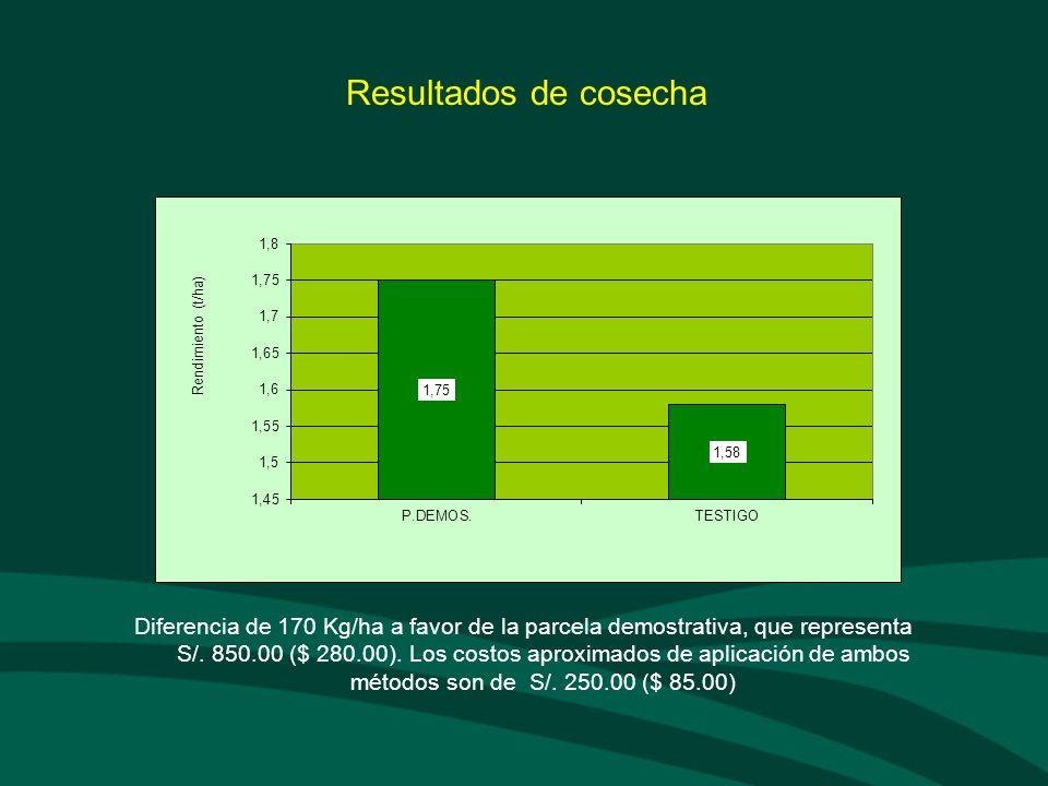 Resultados de cosecha Diferencia de 170 Kg/ha a favor de la parcela demostrativa, que representa S/. 850.00 ($ 280.00). Los costos aproximados de apli