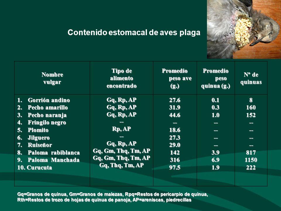 Contenido estomacal de aves plagaNombrevulgar Tipo de alimentoencontrado Promedio peso ave (g.) Promedio peso quinua (g.) Nº de quinuas 1.Gorrión andi