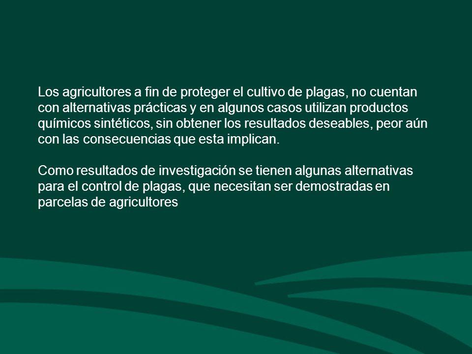 Los agricultores a fin de proteger el cultivo de plagas, no cuentan con alternativas prácticas y en algunos casos utilizan productos químicos sintétic