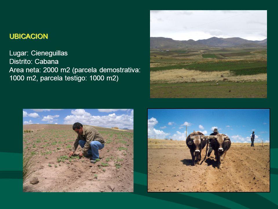 UBICACION Lugar: Cieneguillas Distrito: Cabana Area neta: 2000 m2 (parcela demostrativa: 1000 m2, parcela testigo: 1000 m2)