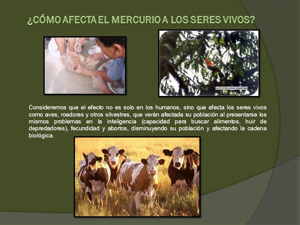 Consideremos que el efecto no es solo en los humanos, sino que afecta los seres vivos como aves, roedores y otros silvestres, que verán afectada su po