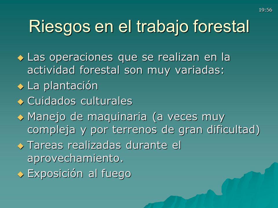 19:56 Riesgos en el trabajo forestal Las operaciones que se realizan en la actividad forestal son muy variadas: Las operaciones que se realizan en la