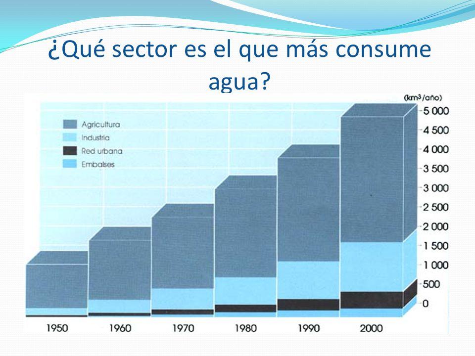 ¿ Qué sector es el que más consume agua?