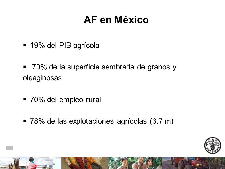 AF en México 19% del PIB agrícola 70% de la superficie sembrada de granos y oleaginosas 70% del empleo rural 78% de las explotaciones agrícolas (3.7 m