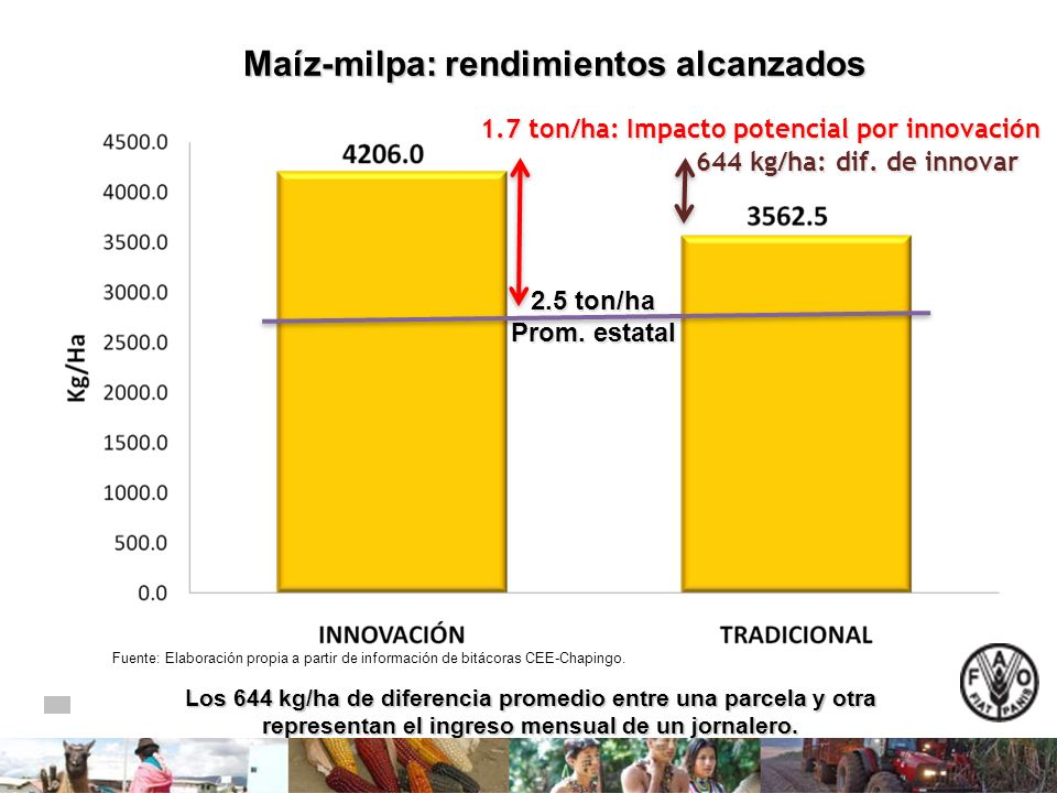 Maíz-milpa: rendimientos alcanzados Fuente: Elaboración propia a partir de información de bitácoras CEE-Chapingo. Los 644 kg/ha de diferencia promedio