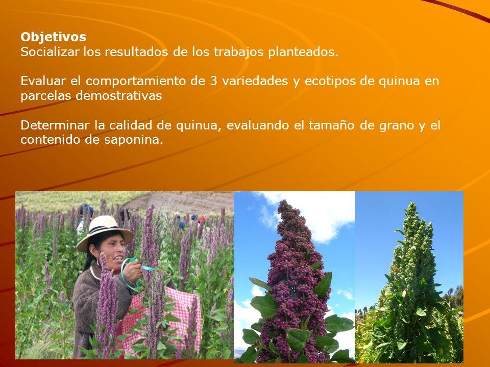 Objetivos Socializar los resultados de los trabajos planteados. Evaluar el comportamiento de 3 variedades y ecotipos de quinua en parcelas demostrativ